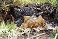 National nature reserve Soos in spring 2015 (15).JPG