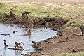 Nature of Ngorongoro Conservation Area (111).jpg