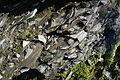 Naturschutzgebiet Am roten Steine - Hausberg - Schichten der unteren Jura (6).JPG