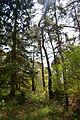 Naturschutzgebiet Mittleres Innerstetal mit Kanstein - Innerste bei Rhene - Uferwald (3).JPG