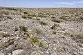 Near Fourmile Draw - Flickr - aspidoscelis.jpg