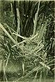 Nestlings of forest and marsh, by Irene Grosvenor Wheelock; (1902) (14747973634).jpg