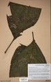 Neuchatel Herbarium Types NEU000113003.tif