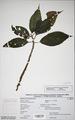Neuchatel Herbarium Types NEU000113011.tif