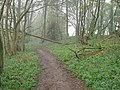North Downs Way in Birches Wood - geograph.org.uk - 1254151.jpg