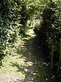 North Downs Way which runs alongside the road here. - geograph.org.uk - 463679.jpg