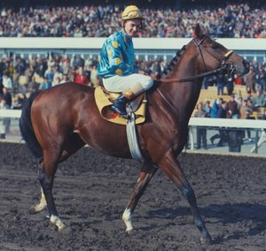 Northern Dancer - Image: Northerndancer 2
