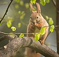 Nutty squirrel (51163589124).jpg