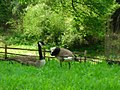 OKC Zoo May 2007 - 11 (497210746).jpg