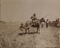 Old time Peegan squaw with travois and papoose (HS85-10-18748).jpg