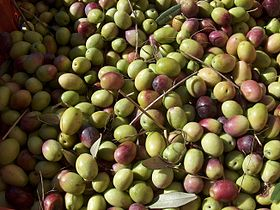 Olive in prevalenza cv. Nera di Gonnos raccolte in fase di invaiatura