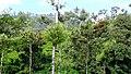 On the way to Akkalamai - panoramio (3).jpg