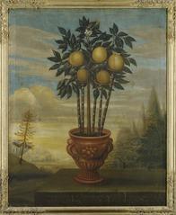 Orangeträd i urna
