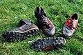 Orienteering shoes.JPG