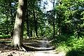 Orry-la-Ville (60), forêt du Coye, parcelle 458, à l'ouest du carrefour de la Broutillerie.jpg