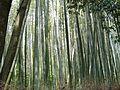 PădureDeBambus.JPG