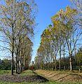 P1340257 Angers parc de Balzac rwk.jpg