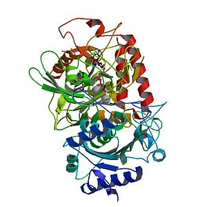 Phosphoenolpyruvate carboxykinase - PDB rendering based on 1khb.