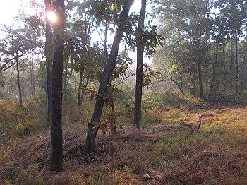 PEACKING SUN, NAGZIRA WILDLIFE SANCTUARY2.jpg