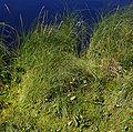 PNBT Kacze oko zbiorowisko z żurawiną i czermienią błotną2 03.07.10 p.jpg