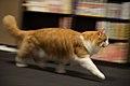 Panning of a cat (8325233516).jpg