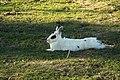 """Parcul de Animale - """"Moara de Vant"""" (8110151350).jpg"""