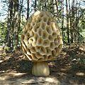 Park grzybowy w Pilce (Morchella esculenta).JPG