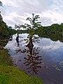 Parque Nacional Punta Izopo 01.jpg