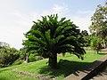Parque de Santa Catarina, Funchal - 2020-09-08 - IMG 8659.jpg