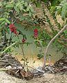 Parque nacional Aguaro-Guariquito 032.jpg