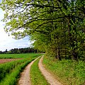 Path - Flickr - Stiller Beobachter (4).jpg