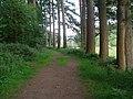 Path southeast in Doach wood - geograph.org.uk - 463417.jpg