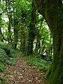 Path to a ruin, Laugharne - geograph.org.uk - 1017449.jpg