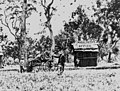 People gathered around a wagon outside the Wheal Edith Mine office at Stanthorpe, 1872 (5077439188).jpg