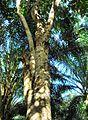 Pepohonan di semak belukar (11).JPG