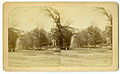 Photograph of a Tree Lined Street - NARA - 7829560.jpg