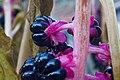 Phytolacca Americana Flowers Berries.jpg