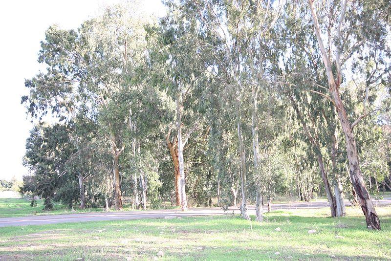 ראש ציפור - פארק הירקון
