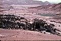 PikiWiki Israel 75837 oasis.jpg