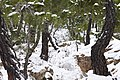 Pinar ^ Nieve - panoramio (15).jpg