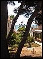 Pinas y la mar - panoramio.jpg