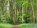 Pishillbury Wood, Maidensgrove - geograph.org.uk - 797906.jpg