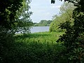 Pitsford Water Nature Reserve - geograph.org.uk - 185975.jpg