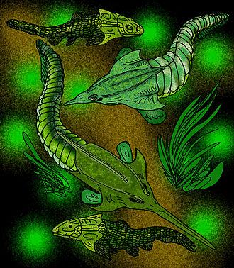 Ostracoderm - Image: Pituriaspida