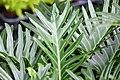 Plant of Thailand - 27.jpg