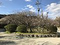 Plum trees in Dazaifu Temman Shrine 4.jpg