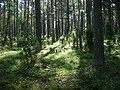 Poland. Gmina Jedwabno. Witówko 017.JPG