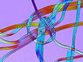 Polyurethane Fibers (micro photo).jpg