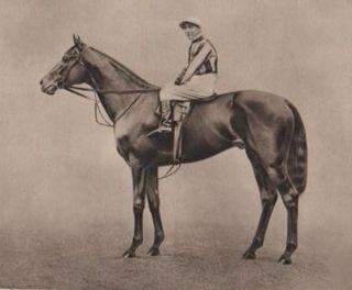 Pommern (horse) British-bred Thoroughbred racehorse