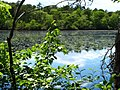 Pond view from bike trail - panoramio.jpg